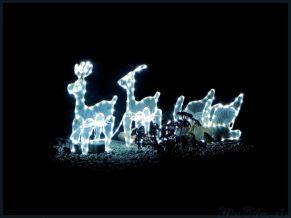 Bluelight Reindeers