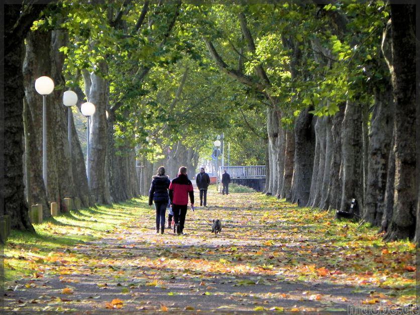 Herbstspaziergang in der zweibrücker Allee