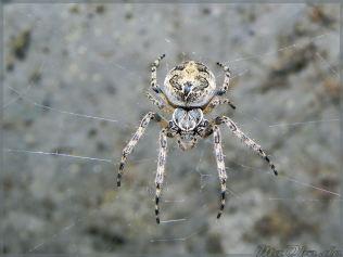 arachne_maobe_de_DSCN3372